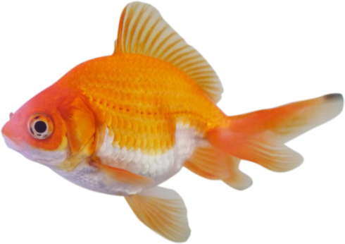 FISHSHAPED