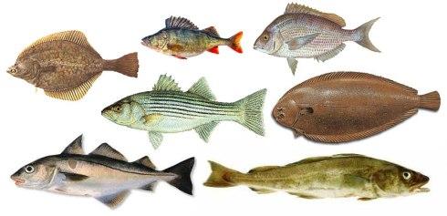 pescado-escamoso-maridaje-con-vinos