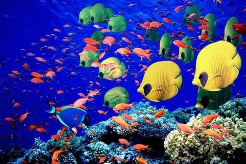 banco-de-peces-de-colores-en-un-arrecife-de-coral-en-el-mar-rojo_galeria_principal_size2